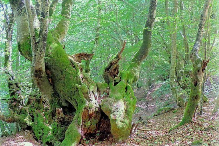 Bosque Carlac Encantado