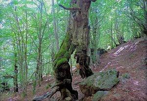 Los Fantasmas del Bosque de Carlac