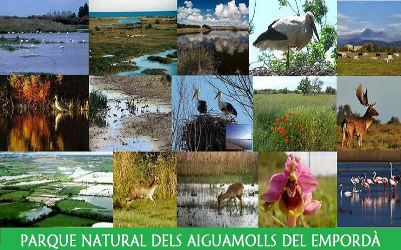 Parque Natural dels Aiguamolls del Emporda en Empuriabrava