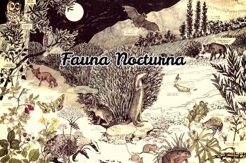 Fauna Nocturrna del Salencar de Barruera