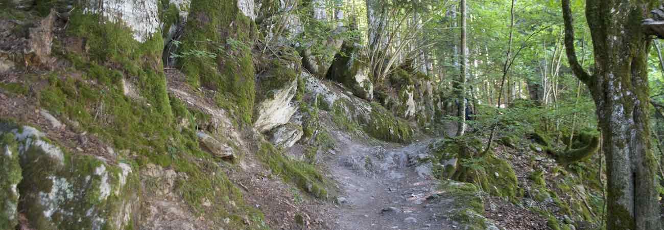 Ruta Circular Embalse de Irabia Selva de Irati
