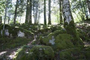 Frondosidad de la Selva de Irati