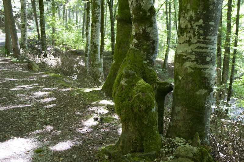 Hayedos Selva de Irati