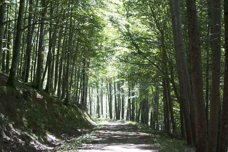 Rutas por la Selva de Irati