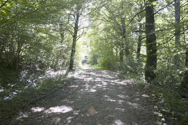 Basajaunberro ruta roncesvalles